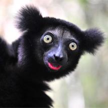 Muiswerk Online Indri - 30 juli 2015